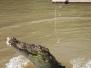 Kakadu & Litchfield - Krokodile