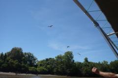 Kakadu & Litchfield - Vögel